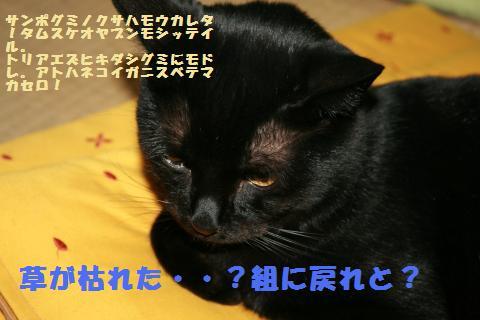 018_convert_20101205002304.jpg