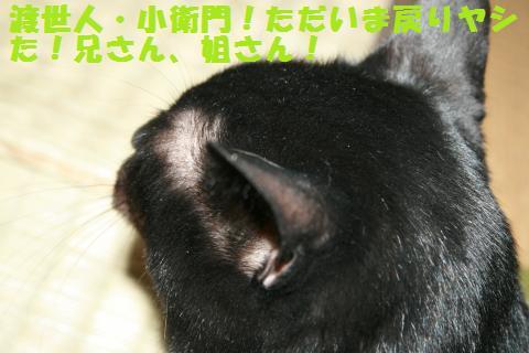 018_convert_20101210221723.jpg