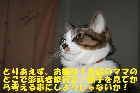 018_convert_20110109232612.jpg