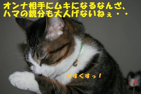 018_convert_20110228231637.jpg