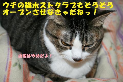 018_convert_20110415192600.jpg