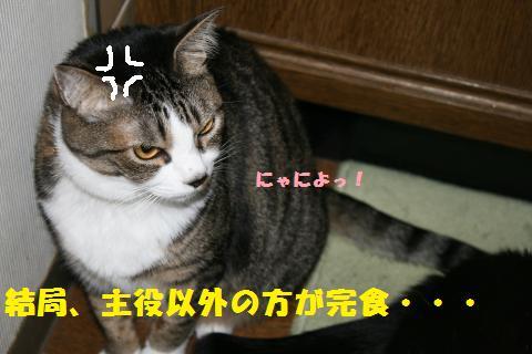 018_convert_20110428212703.jpg