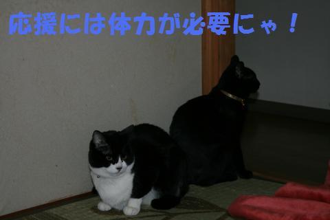 019_convert_20100225201131.jpg
