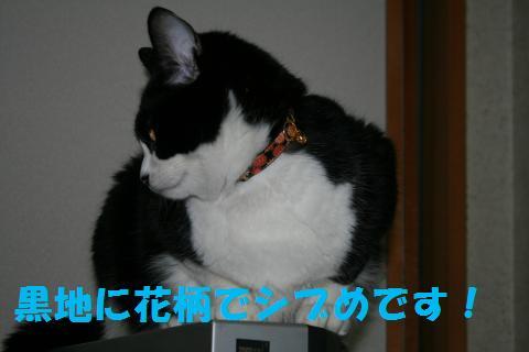 019_convert_20100304224219.jpg