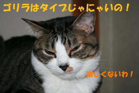 019_convert_20100615202912.jpg