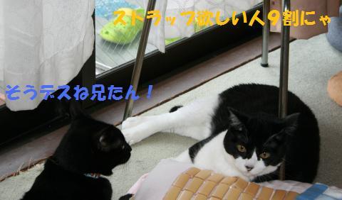 019_convert_20100801224905.jpg