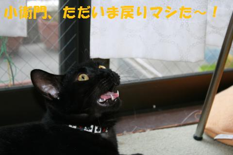 019_convert_20100812184955.jpg