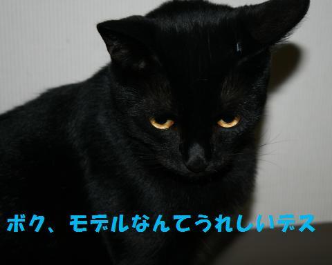 019_convert_20100925211312.jpg