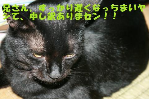 019_convert_20101210221908.jpg