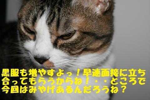 019_convert_20101210223129.jpg