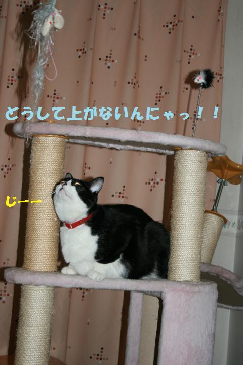 019_convert_20101214203717.jpg