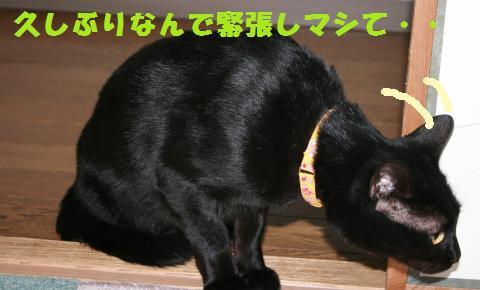 019_convert_20110122192849.jpg