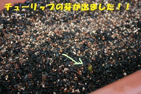 019_convert_20110216193852.jpg