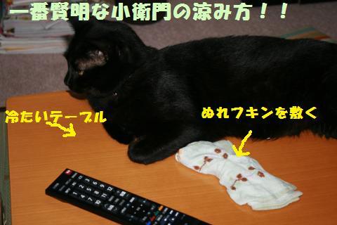 019_convert_20110705225923.jpg