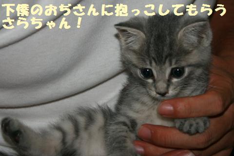 019_convert_20111018231453.jpg