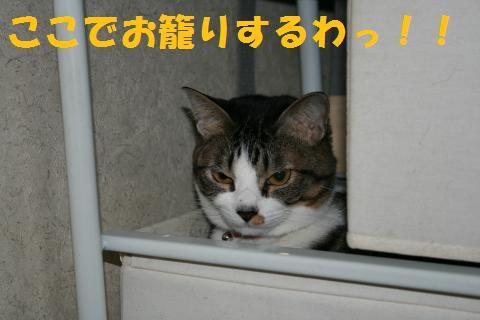 020_convert_20100227235259.jpg