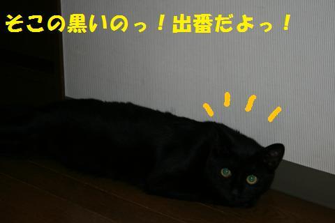 020_convert_20100705230155.jpg