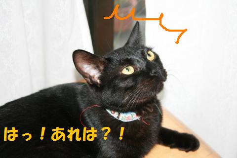020_convert_20100807134446.jpg