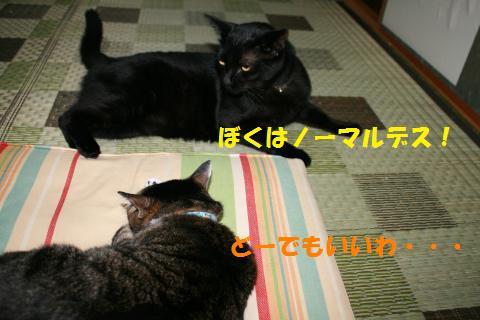 020_convert_20100818204428.jpg