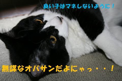 020_convert_20100901223525.jpg