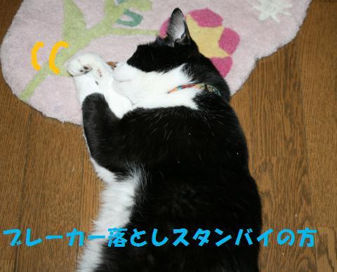 020_convert_20100904212435.jpg