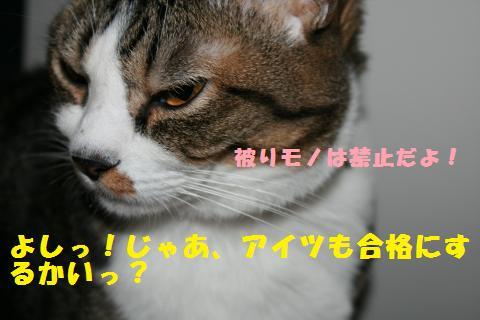 020_convert_20101126212900.jpg