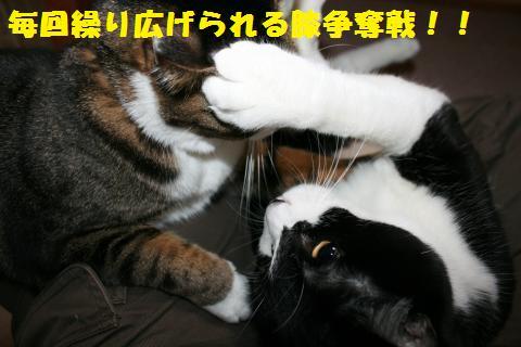 020_convert_20101228220552.jpg