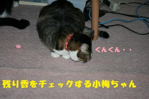 020_convert_20110122193030.jpg