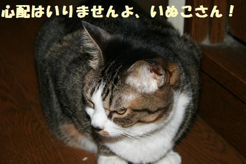 020_convert_20110624201509.jpg