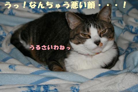 020_convert_20110912195407.jpg