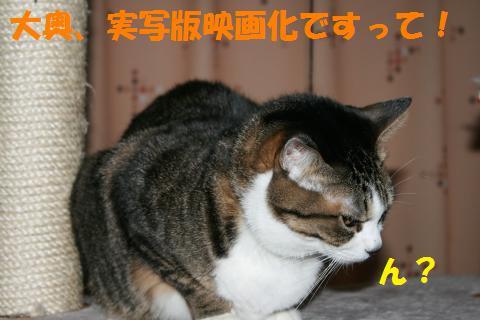 021_convert_20100205225742.jpg