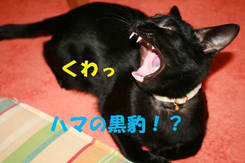 021_convert_20100209223328.jpg