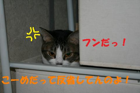 021_convert_20100227235427.jpg