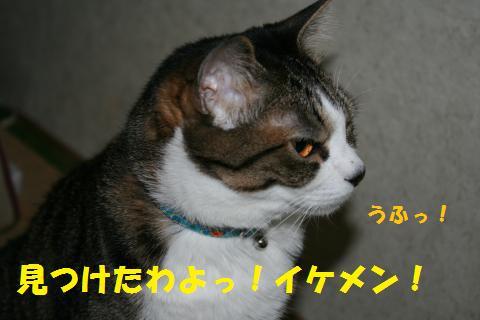 021_convert_20100704180721.jpg