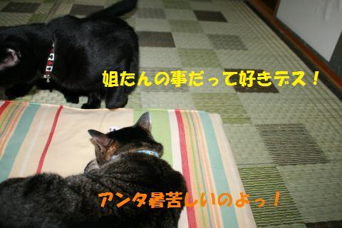021_convert_20100818204608.jpg