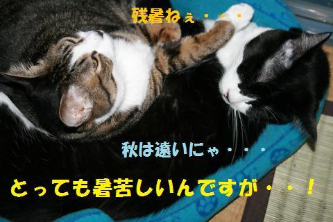 021_convert_20100912203955.jpg