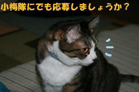 021_convert_20101016232452.jpg