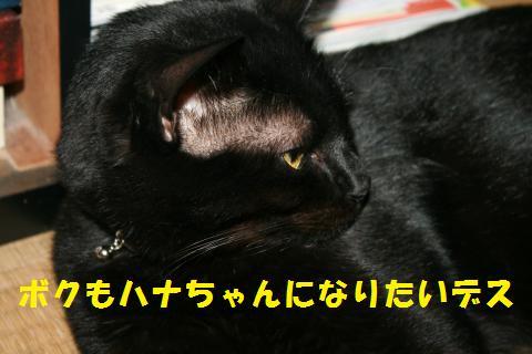 021_convert_20101026195540.jpg