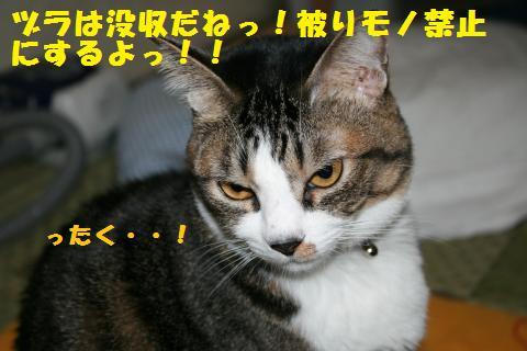 021_convert_20101117205805.jpg