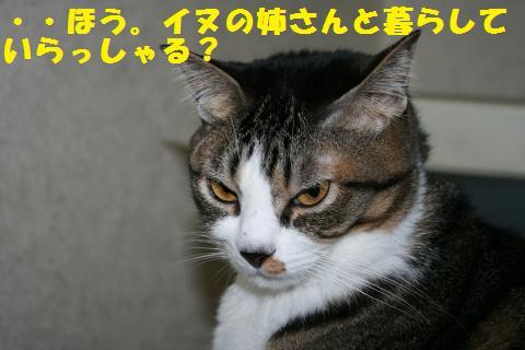 021_convert_20101212163654.jpg