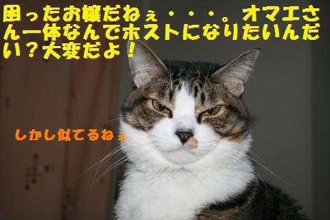 021_convert_20110109232748.jpg