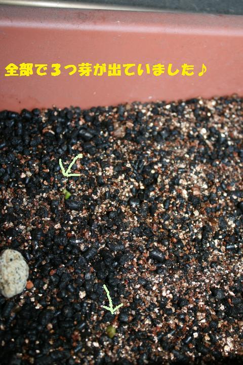 021_convert_20110216194050.jpg
