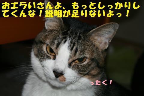 021_convert_20110323224508.jpg