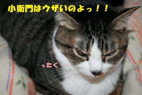 021_convert_20110410211501.jpg