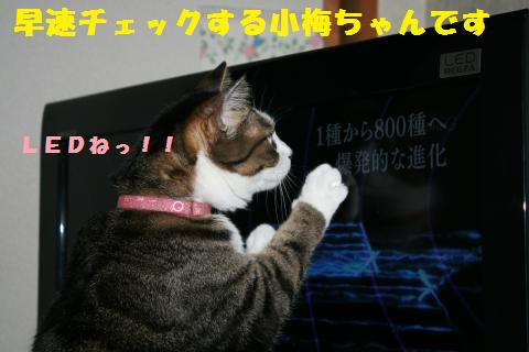 021_convert_20110529214815.jpg