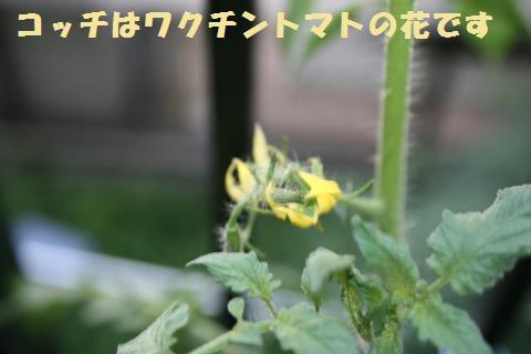 021_convert_20110722205746.jpg