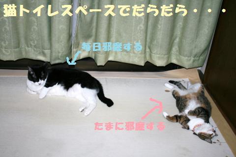 021_convert_20110813220439.jpg