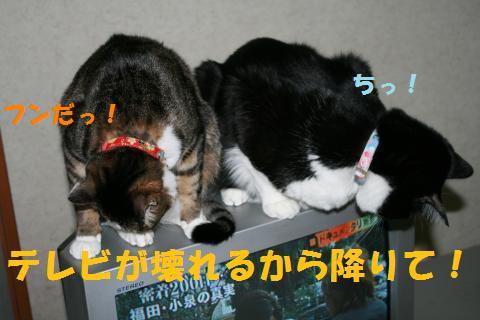 022_convert_20100403185027.jpg