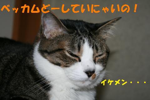 022_convert_20100617235716.jpg
