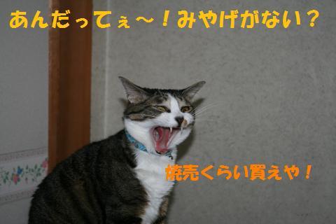022_convert_20100807133103.jpg